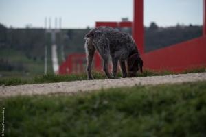 Le chien et la passerelle - L'Axe Majeur de Cergy