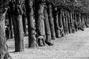 Des arbres et des gens - parc du château de Saint-Germain-en-Laye